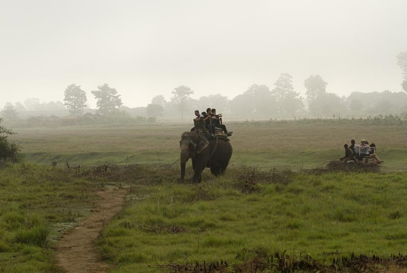 Olifantensafari
