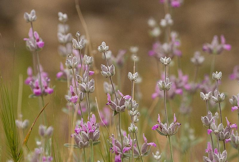 Plant onbekend