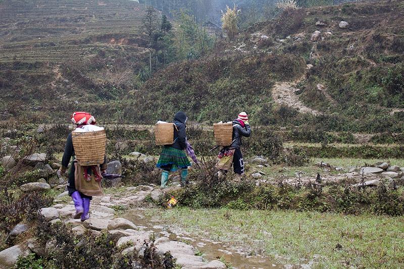 Hmong stam
