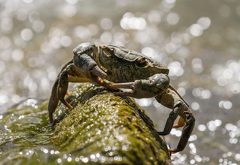 Krab spec