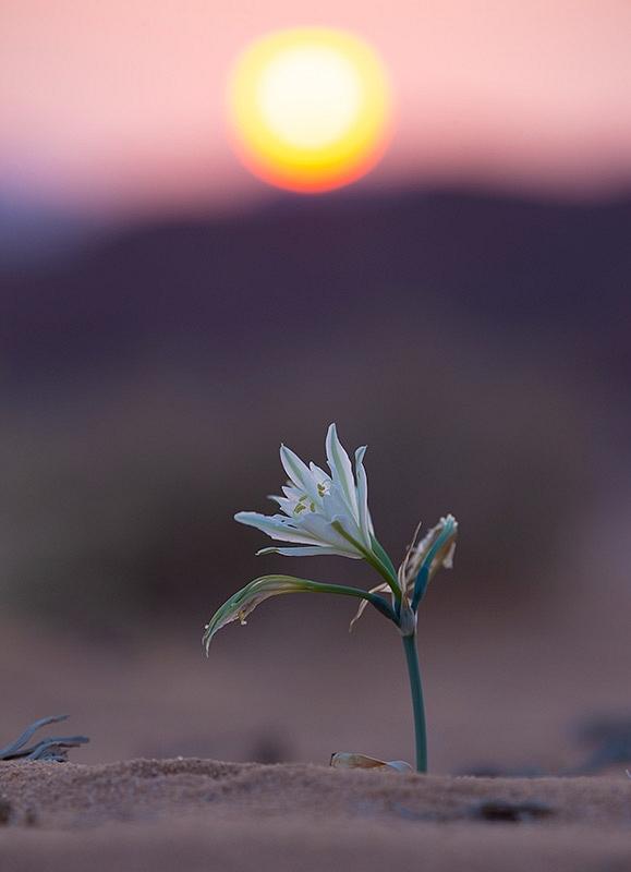 21092018-Wadi-Rum-3810.jpg